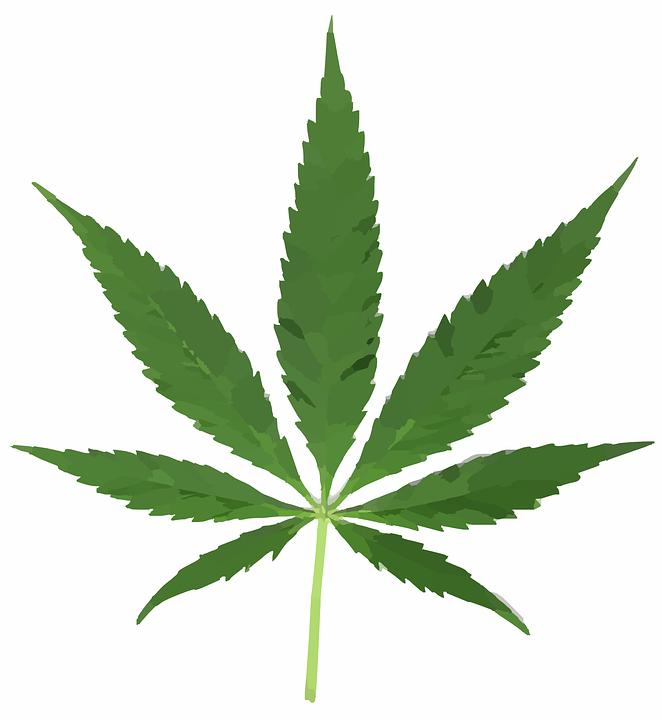 Des boutiques en ligne proposent du cannabis