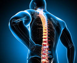 Orthopédie dos