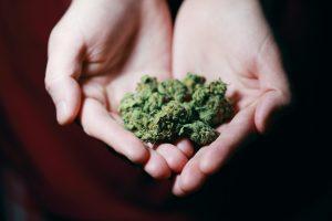 herbe cannabis