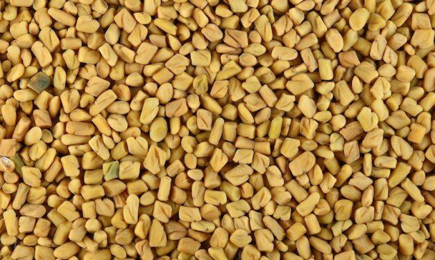 Comment consommer le Fenugrec en graines ?